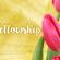 Women's Fellowship Banner
